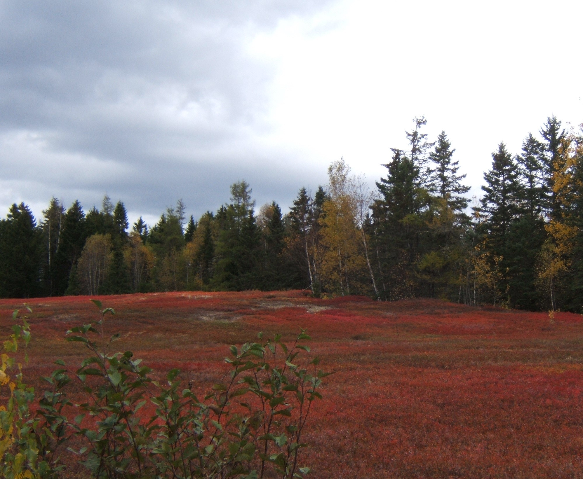 vegetation 3